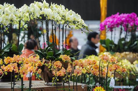 new year flower tradition 10 000 pots of flowers for sale to welcome