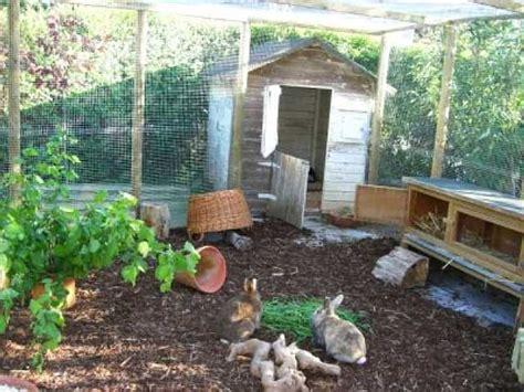 hühner außengehege kaninchen info fabis au 223 engehege