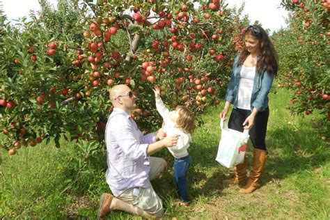 fruits n such orchard best apple orchard winners 2015 10best readers choice