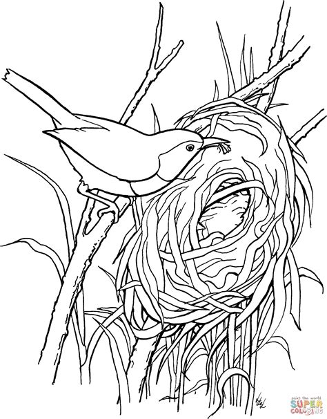 coloring sheet bird s nest swallow bird nest coloring pages coloring pages