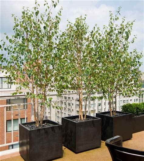 Patio Tree Planters by 25 Best Ideas About Tree Planters On