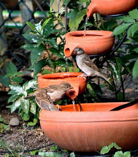 Bird Feeder Water Fountain Birdcage Design Ideas Bird Ideas