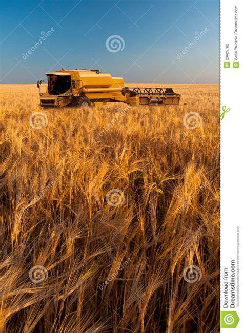 Steunk Combines Modern Tech With Elements by Modern Combine Harvesting Wheat Stock Photography Image
