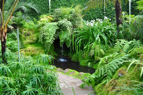 Backyard View Tatton Park Fernery By Forestina Fotos On Deviantart