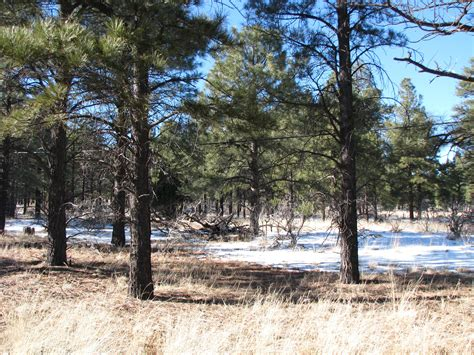 2 5 acre treed flagstaff lot with a 2 car garage workshop lot for sale in flagstaff