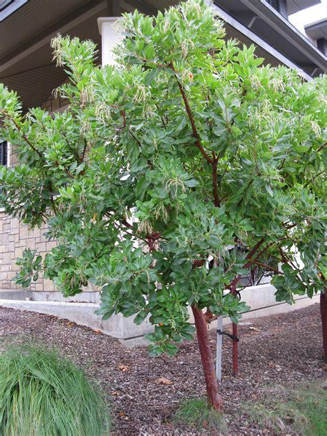 Zone Gardening - arbutus marina sloat garden center