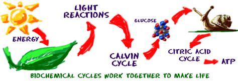 Bio Chemical chem4kids biochemistry