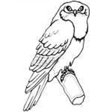 tawny owl coloring page how to draw tawny owl
