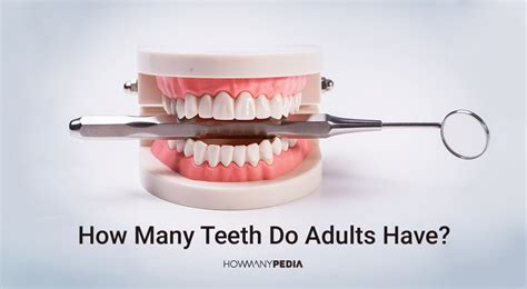 how many teeth does a how many bones are in the human howmanypedia