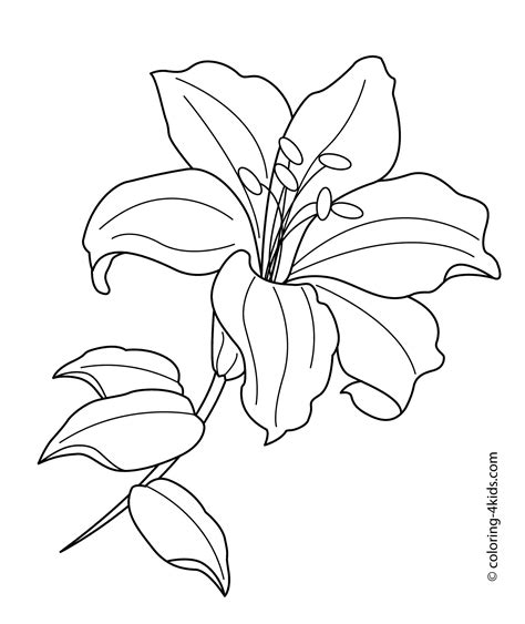 coloring pages of different types of flowers coloring pages of different types of flowers new lilium