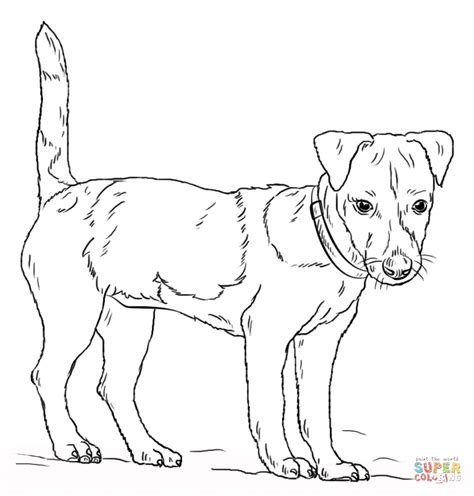 Jack Russell Terrier Coloring Page Free Printable Terrier Coloring Pages