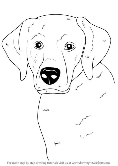 how to labrador in learn how to draw a labrador farm animals step by step drawing tutorials