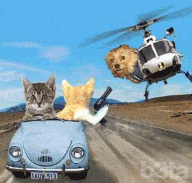 animasi berkerak kucing lucu animasi  gambar bergerak