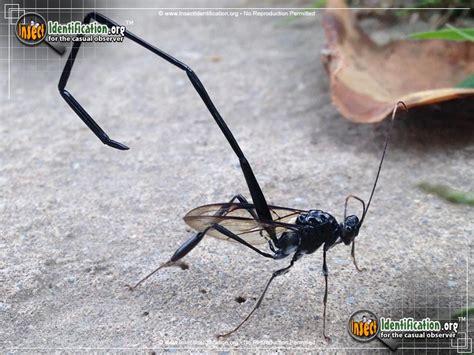 long skinny black bug in house long skinny black bug in house house plan 2017