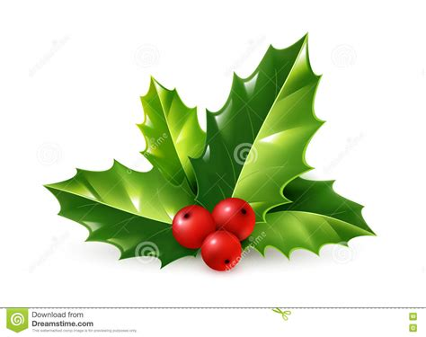 christmas leaf vector realistic ornament green leaves and berries on white background