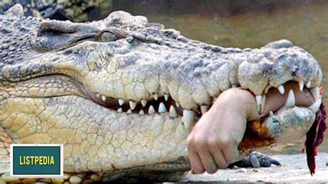 Animal Planet World S Most Dangerous Animals top 10 most dangerous animals in the world