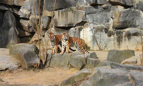 Zoologischer Garten Berlin Prezzo by 20 Migliori Cose Da Fare A Berlino Sognounviaggio It