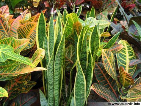Charmant Plantes Grimpantes D Interieur #7: Plantes-vertes-600x450.jpg