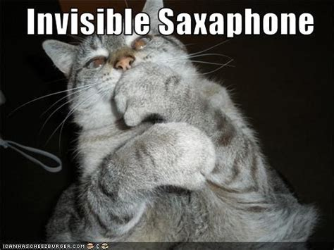 Invisible Cat Memes - 17 best images about invisible cat on pinterest happy