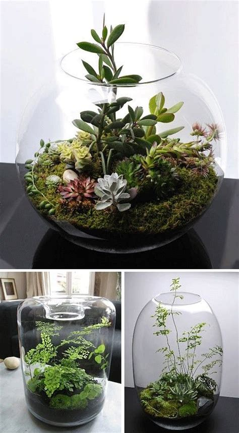 miniature indoor plants 241 best images about terrarium wardian case on
