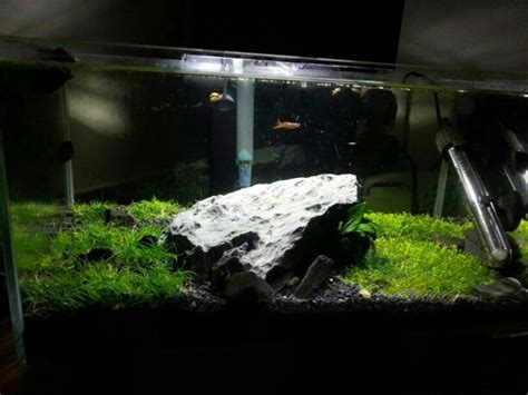 fluval edge 2 beleuchtung lighting for fluval edge 23l planted uk aquatic plant