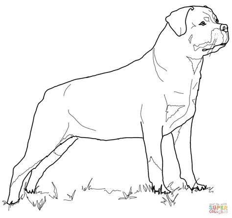 rottweiler coloring book mastiff dogs coloring pages breeds picture
