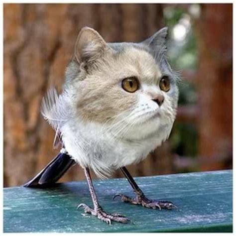 tim s catbird