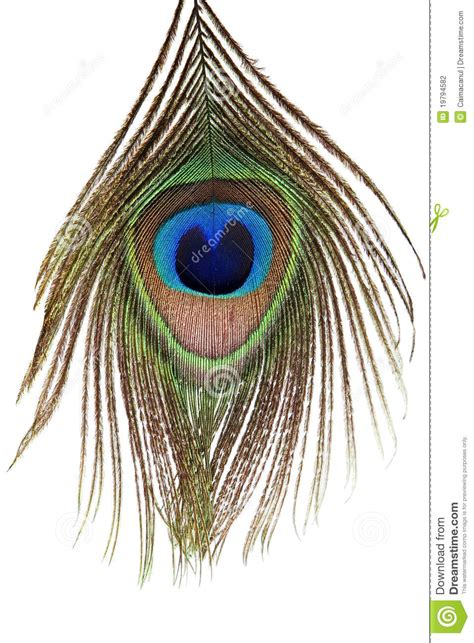 Detail Of Peacock Feather Eye Stock Photo Image Of Bird