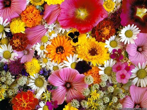 wallpaper flower mix desktop wallpapers 187 flowers backgrounds 187 mixed flowers