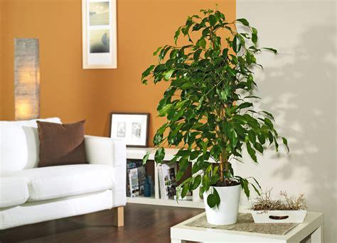 Gartenpflanzen Lexikon by Zimmerpflanzen Selbst De