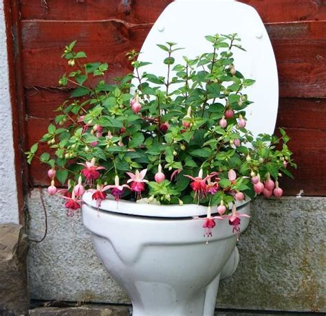 Toilet Flower Planter by 24 Best Images About Toilet Flower Pots On