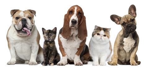 wag sitting professional pet sitters pet sitting services in albuquerque