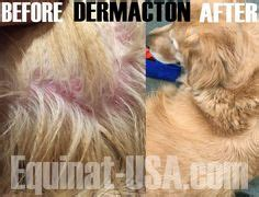 golden retriever hair loss problem atopic dermatitis ad is also referred to as inhalant allergic dermatitis or atopy