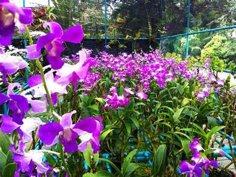 piante fiorite ricanti fiori da giardino primaverili i fiori di primavera per