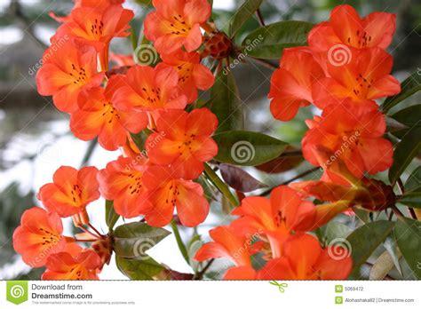 pianta fiori arancioni bei fiori arancioni fotografia stock immagine 5069472