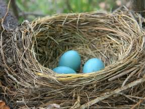 nesting information for common backyard birds