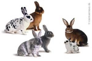 verschiedene arten hã usern alle kaninchenrassen mit bild kaninchenrassen info