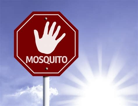 how to keep mosquitoes out of house how to keep scorpions out of your house bug weed mart