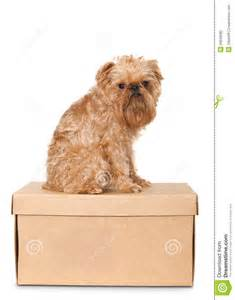 Dog on cardboard box stock photography image 26649382