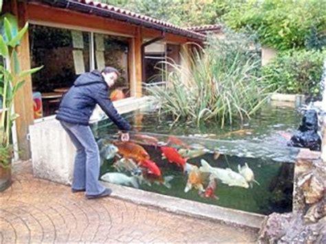 Lu Uv Untuk Kolam Ikan memelihara ikan koi akuarium ikan hias