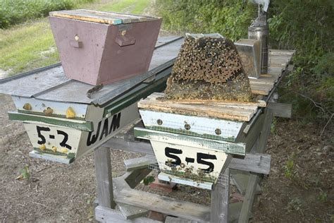 top bar hive entrance location opening hives 200 top bar hives the low cost