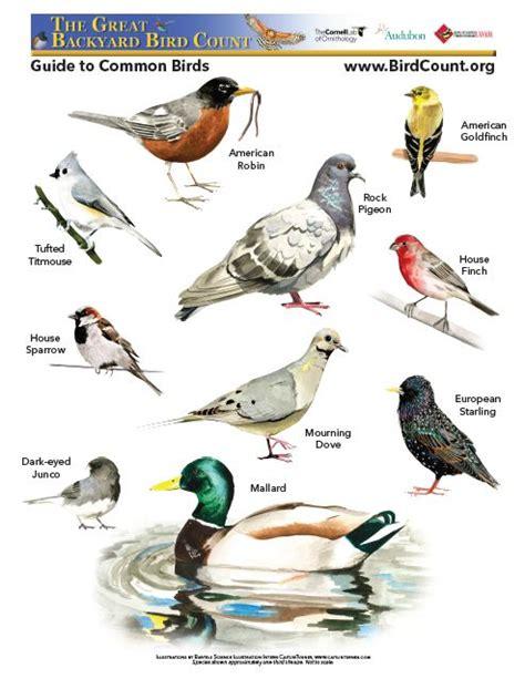 great backyard bird count thermal birding