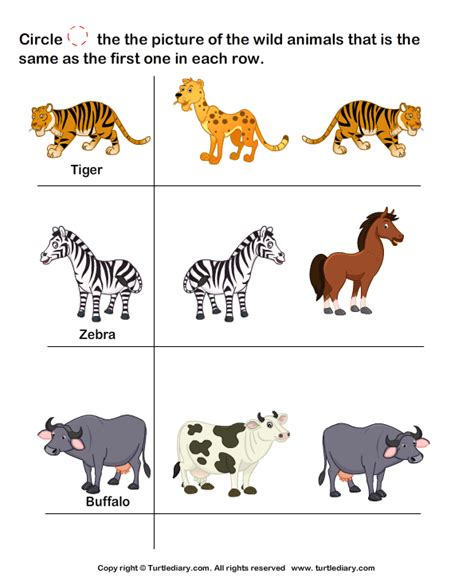 printable animal pictures of wild animals wild animals worksheet4 smart kids printables