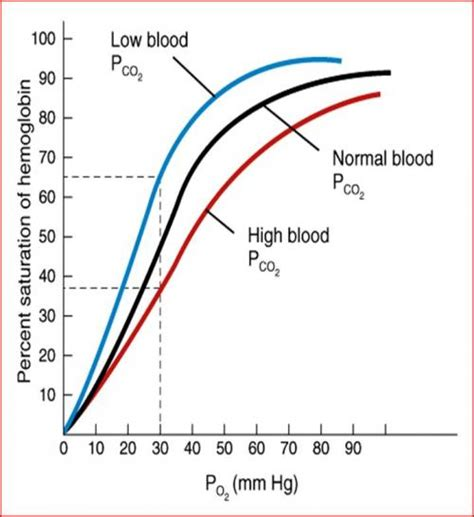 bohr effect diagram bohr effect graph related keywords bohr effect graph