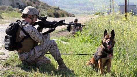 army handler usmc enlisted descriptions working handler