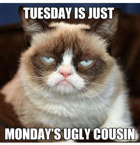 Grumpy Cat Monday Meme - tuesday is just monday s ugly cousin grumpy cat
