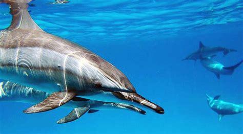 los animales marinos al 8498256720 cortisol estr 233 s y delfines enriquecimiento ambiental