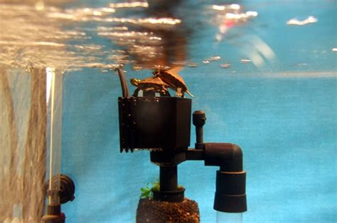 maintaining water quality in your turtle s habitat