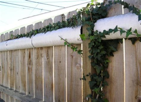 the 25 best ideas about cat fence on top cats