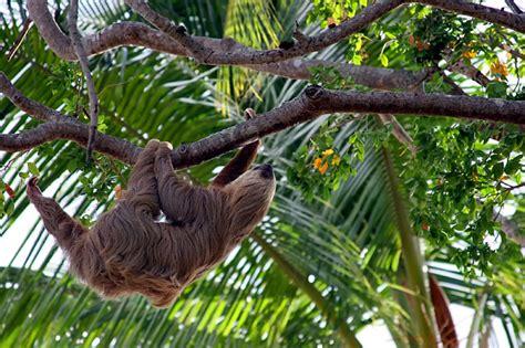 animali piccoli da tenere in casa amazonas regenwald tiere tiere des regenwaldes im